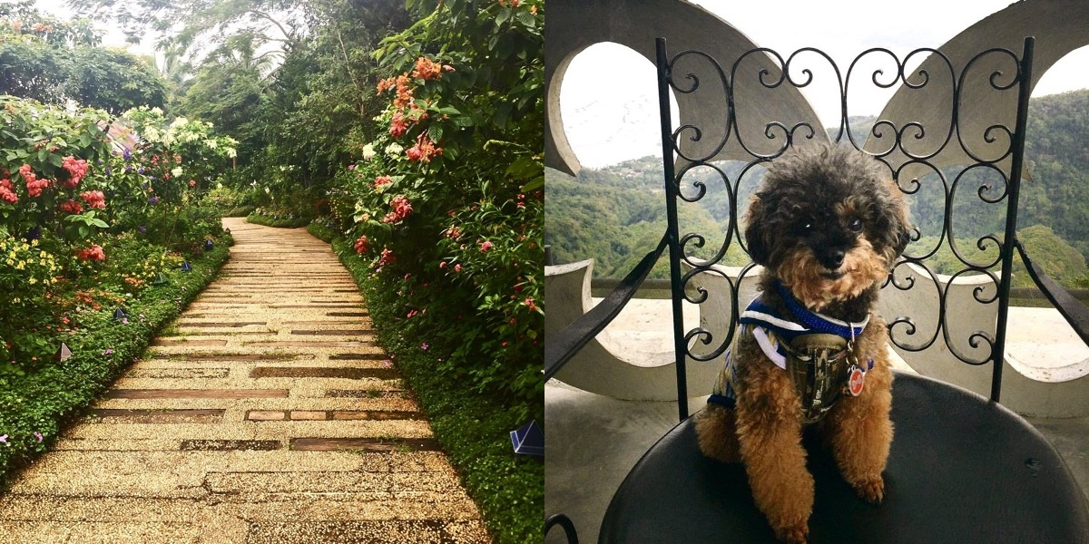 12 Pet-Friendly Places in Tatay for you and your furry friend ... on hotels in boise idaho, hotels in davao philippines, hotels in tacloban city philippines, hotels in alicante spain, hotels in subic bay philippines, hotels in detroit michigan, hotels in makati philippines, hotels in laoag philippines, hotels in lapu-lapu city philippines, hotels in global city philippines, hotels in dagupan philippines, hotels in boston mass, hotels in rio de janeiro brazil, hotels in angeles pampanga philippines, 5 star hotels in philippines, hotels in zamboanga city philippines, hotels in quezon city philippines, hotels in lucena city philippines, hotels in daanbantayan philippines, hotels in cebu city philippines,