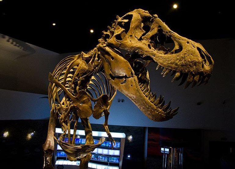 dinosaur-skeleton-display