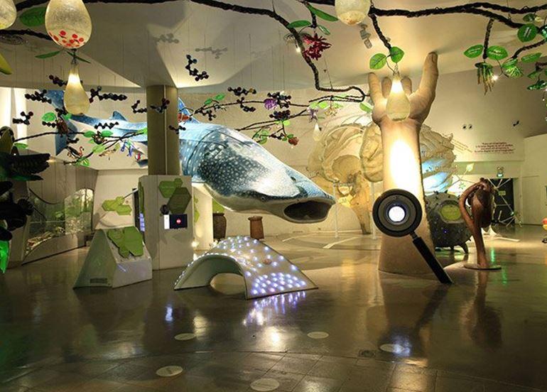 model-whale-display