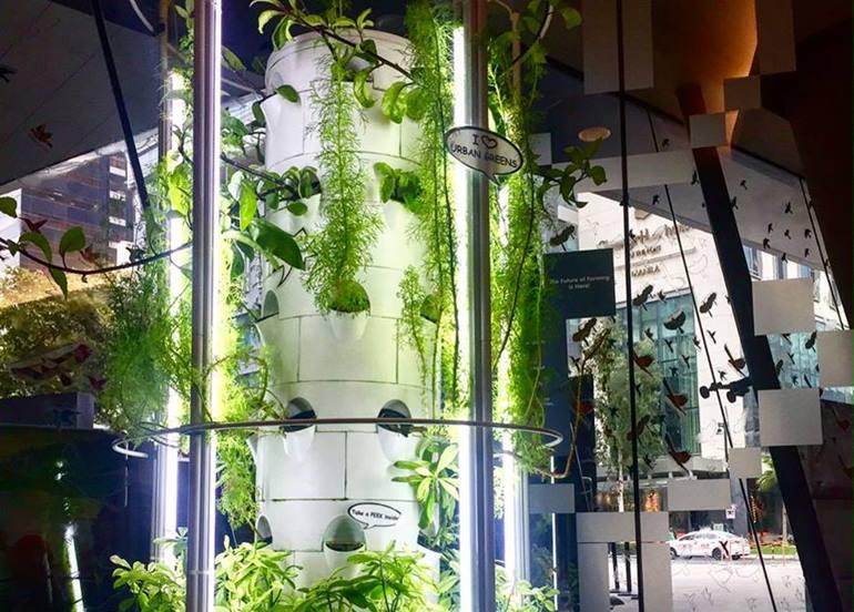 plants-greens-wall
