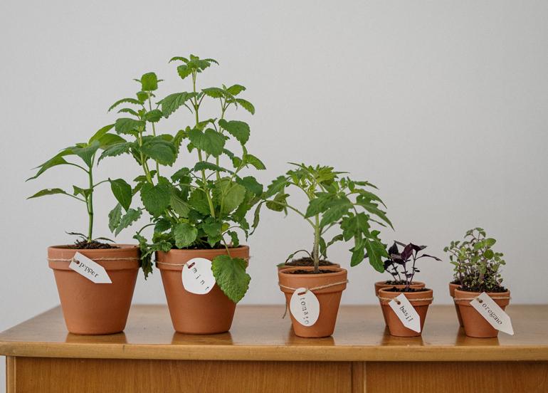 Growing Your Own Indoor Herb Garden 101
